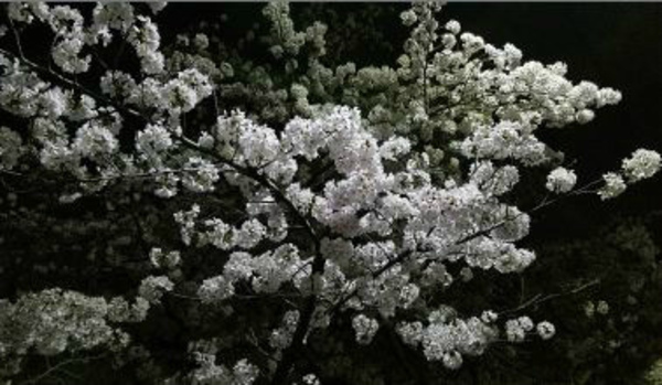 桜が咲くと!施工量・実績豊富!!業務用エアコンなら京都・滋賀デヴァシオン!